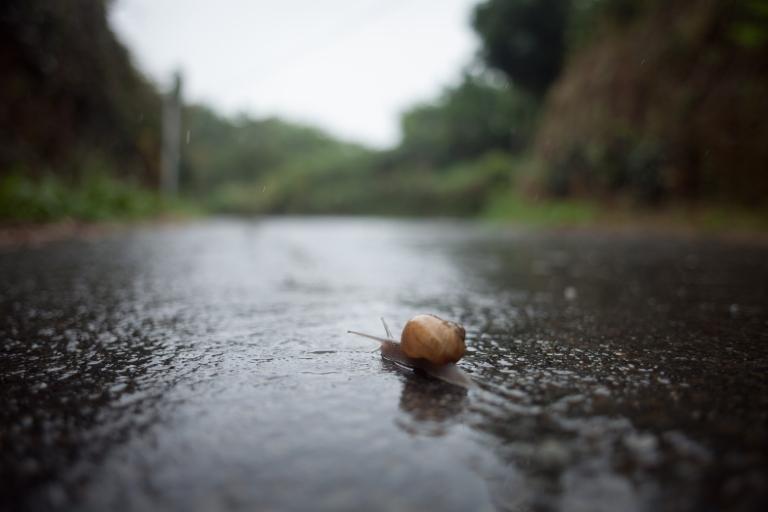 Snail-Final